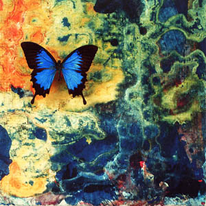 A photograph of a Ulysses Butterfly