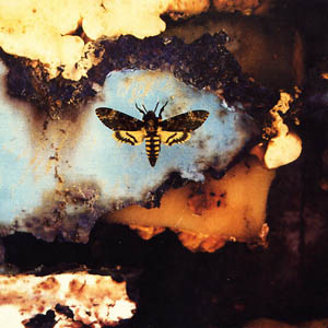 A photograph of a Death's Head Hawkmoth